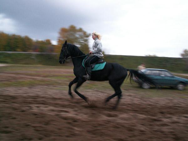 Верховая езда / Конный спорт - Галопчик