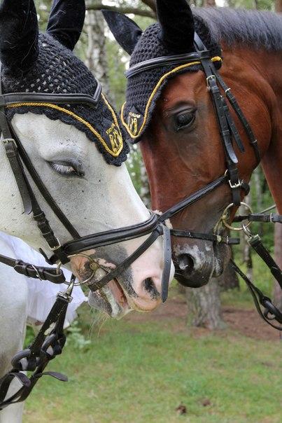 Свадьба на лошадях - Рядышком