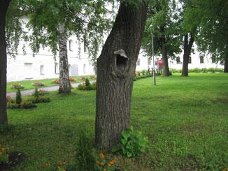 Толгский монастырь - В кедровнике. Дупло-домик