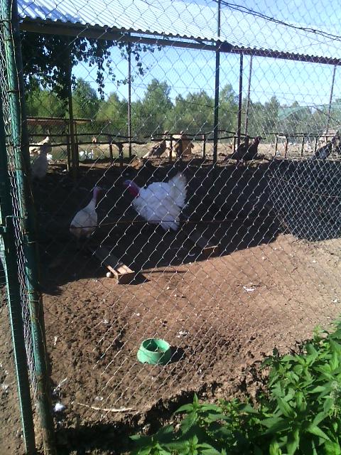 Птичья деревня. 6 сентября 2014 - В птичьей деревне