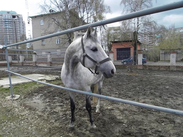 Конь Гранд