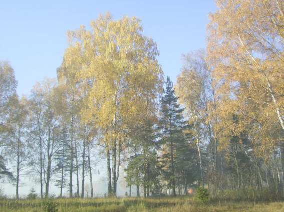 Иппотерапия в Иванове и Ивановской области - Дневник иппотерапевта - Пока погода радует
