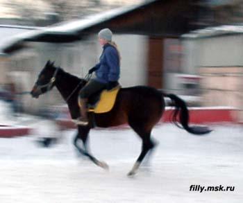 Иппотерапия в Иванове и Ивановской области - Дневник иппотерапевта - Что такое Natural Horsemanship,