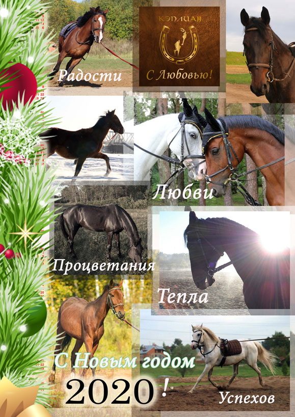 Иппотерапия в Иванове и Ивановской области - Дневник иппотерапевта - С НОВЫМ ГОДОМ!