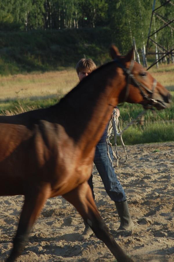 Лошади - Паша