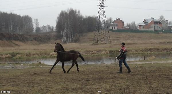 Лошади - Пашка