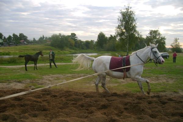 Лошади - Ника зажигает