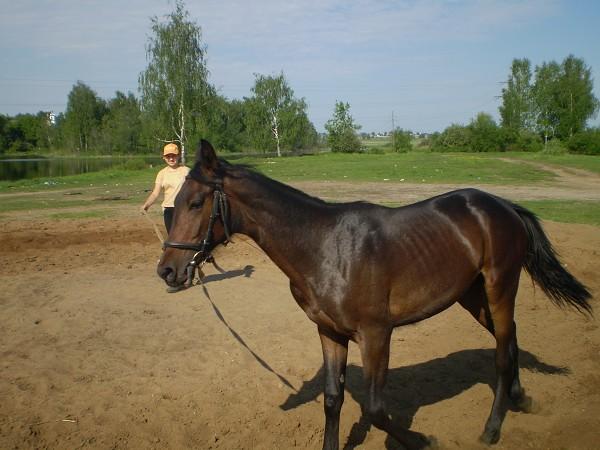 Лошади - Волна