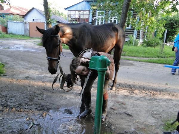 Верховая езда / Конный спорт - Путь домой