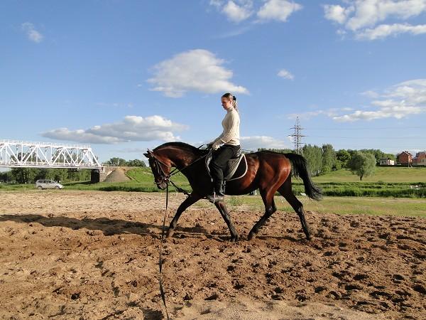 Верховая езда / Конный спорт - Тренировка