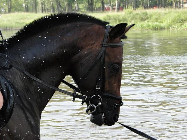 Лошади - Водопад