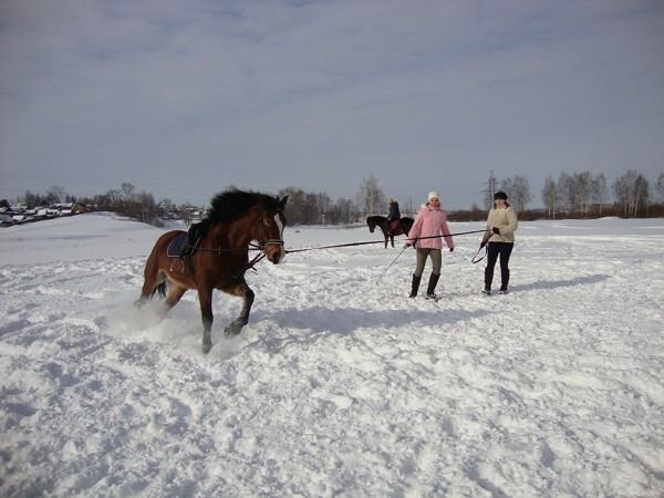 Верховая езда / Конный спорт - Верховая езда. Хохма. Пробежка