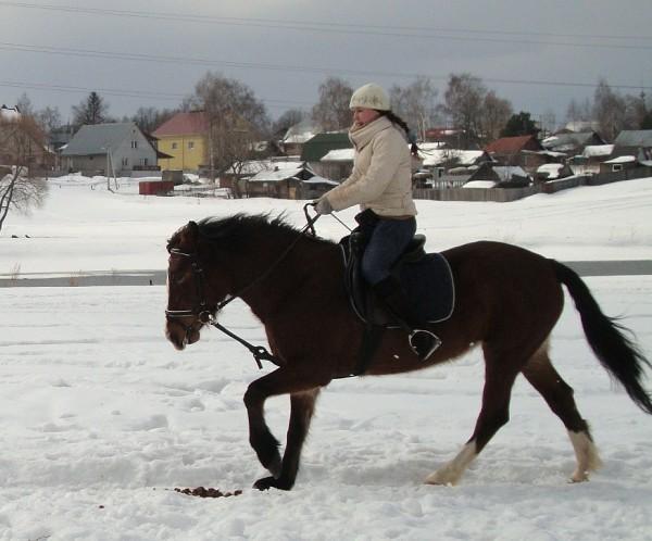 Верховая езда / Конный спорт - Тренировка. Рысь