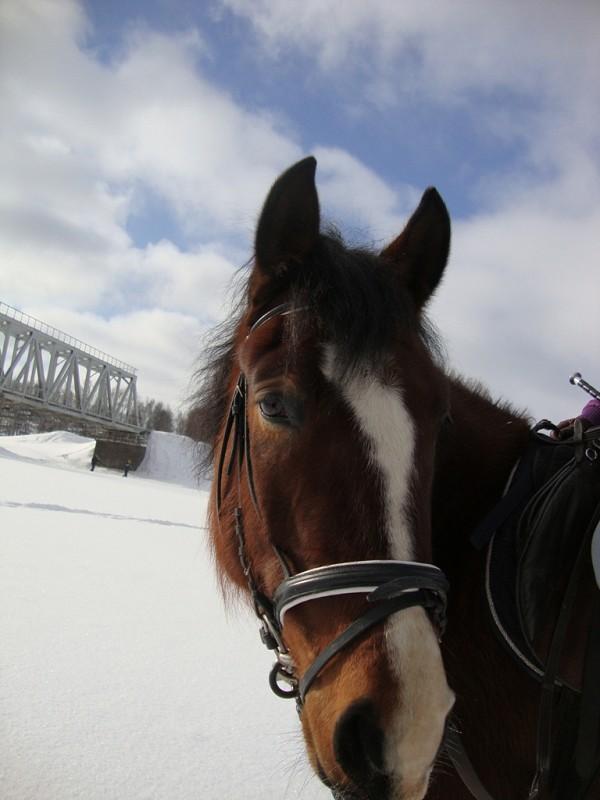 Лошади - Хохма