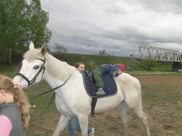Иппотерапия и лечебная верховая езда (ЛВЕ) - Занятие по иппотераии (Тема)