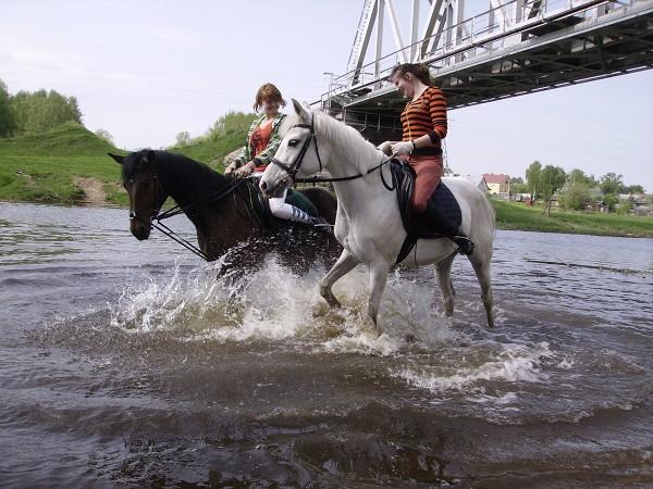 Верховая езда / Конный спорт - А теперь вместе