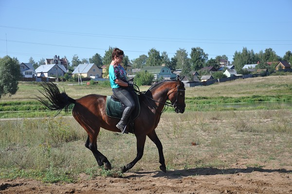 Верховая езда / Конный спорт - На тренировке. Галоп