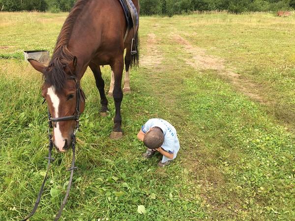 Иппотерапия и лечебная верховая езда (ЛВЕ) - Интересно посмотреть и как лошадь пасется