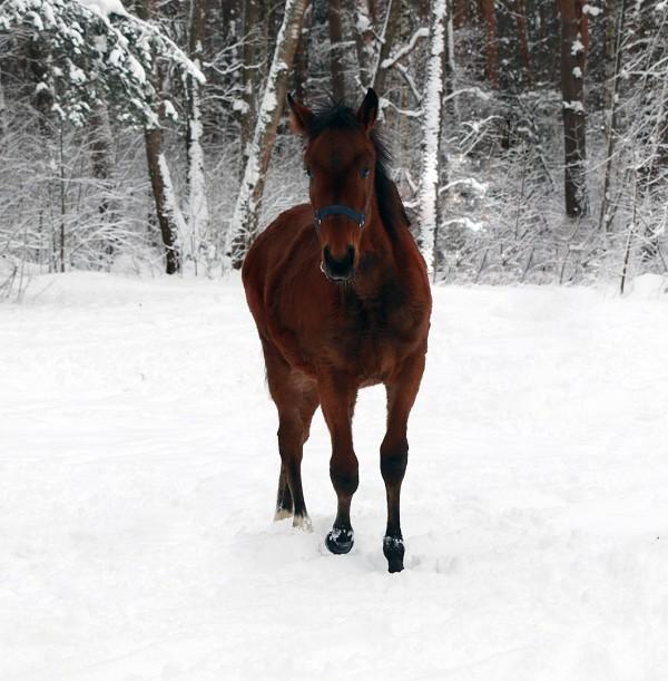 Лошади - На поле. Аристократ