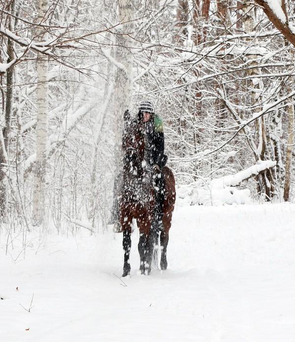 """Лошади - """"Снежный"""" Водопад"""