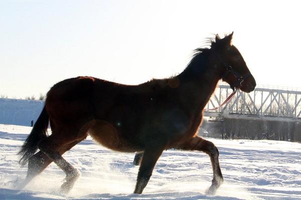 Лошади - Январь 2018. Аристократ