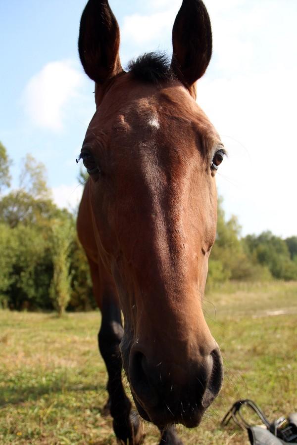 Лошади - Пашка. Фото Виктории Волковой