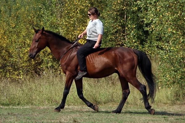 Верховая езда / Конный спорт - Кордео