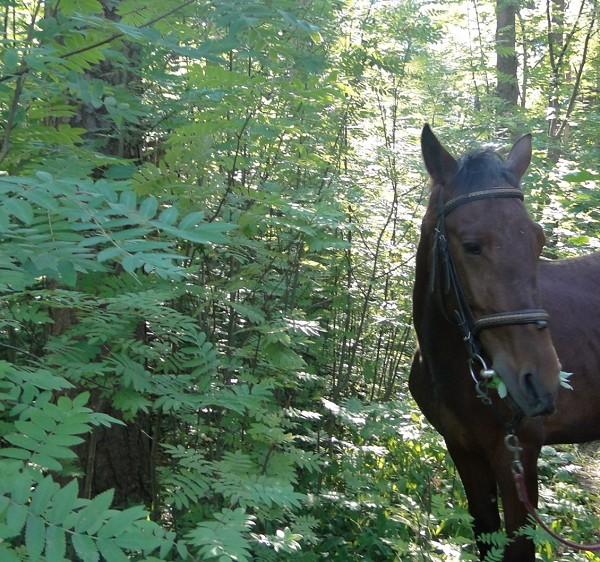 Лошади - В утреннем парке