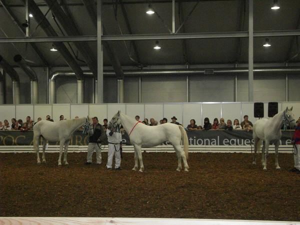 Международная конная выставка «ЭКВИРОС '2011»