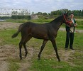 Лошади - Волнушка