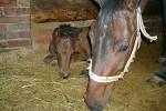 Лошади - Соня с Волнушкой