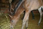 Лошади - Сонечка с дочкой Волнушкой