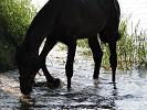 Лошади - Купание. Волна