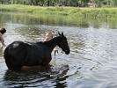 Лошади - Купание. Яна и Волна