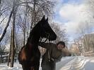 Лошади - мороз и солнце.....