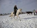 Верховая езда / Конный спорт - Татьяна на Нике. Рысь