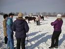 Иппотерапия и лечебная верховая езда (ЛВЕ) - ЛВЕ. На Хохме