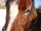 Лошади - Хохма. Крупным планом