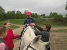 Иппотерапия и лечебная верховая езда (ЛВЕ) - Тема
