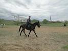 Верховая езда / Конный спорт - Рысью