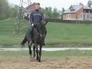 Верховая езда / Конный спорт - Рысь