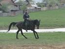 Верховая езда / Конный спорт - Галоп