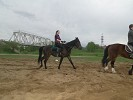Верховая езда / Конный спорт - Вера на Волне