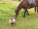 Иппотерапия и лечебная верховая езда (ЛВЕ) - Максим