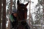 Лошади - Похожи?)