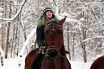 Лошади - Довольные... Зима 2017