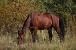 Лошади - Пасется...