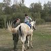 Иппотерапия и лечебная верховая езда (ЛВЕ) - На Нике. Выполнение упражнения - спиной к направлению движения