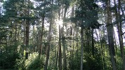 наш мир - Утренний парк