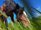 Лошади - Лето. Хохма